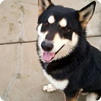 Adopt A Pet :: Parker - Apple valley, CA