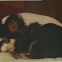 Adopt A Pet :: Leo - Fremont, CA