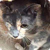 Adopt A Pet :: Gretchen - Piscataway, NJ
