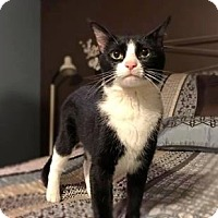 Adopt A Pet :: Penny - Wichita, KS