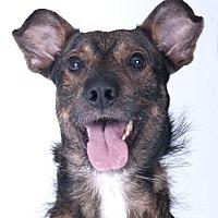 Adopt A Pet :: Buddha - Chicago, IL