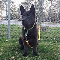 Adopt A Pet :: Nefertiti - Virginia Beach, VA