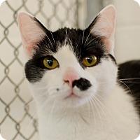 Adopt A Pet :: Link - Greenwood, SC