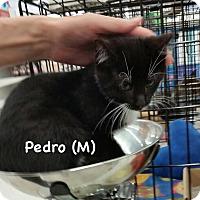 Adopt A Pet :: Pedro - West Orange, NJ