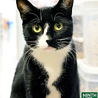 Adopt A Pet :: Aunt May - Oakville, ON