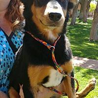 Adopt A Pet :: Lucille - Ogden, UT
