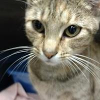 Adopt A Pet :: Monet - Anderson, IN