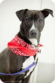 Labrador Retriever/Terrier (Unknown Type, Medium) Mix Dog for adoption in Detroit, Michigan - Luigi-Adopted!