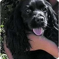 Adopt A Pet :: Princess 4 - San Diego, CA