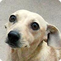 Adopt A Pet :: Misty May - Oakley, CA