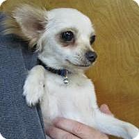 Adopt A Pet :: Skeeter - Shawnee Mission, KS