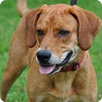 Adopt A Pet :: Duke - Gainesville, FL