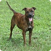 Adopt A Pet :: Polly - Lufkin, TX