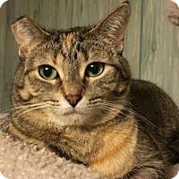 Adopt A Pet :: Avery - Acme, MI