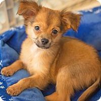 Adopt A Pet :: SkippyJon Jones - Millersville, MD