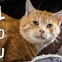 Adopt A Pet :: Lou $50 adoption - Union Lake, MI