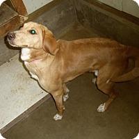 Adopt A Pet :: JAKE - Medford, WI