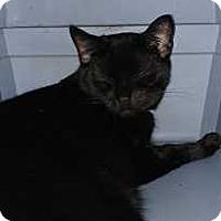 Adopt A Pet :: Frenchie - Harleysville, PA