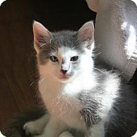 Adopt A Pet :: Sampson - Parkland, FL