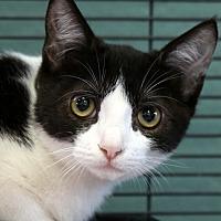 Adopt A Pet :: Coraline - Sarasota, FL
