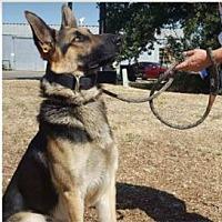 Adopt A Pet :: ASTRO - Red Bluff, CA