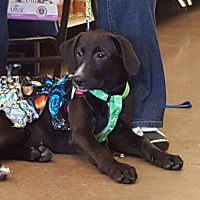 Adopt A Pet :: Diva - SOUTHINGTON, CT