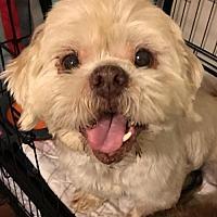 Adopt A Pet :: Oden - McKinney, TX