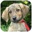 Photo 4 - Hound (Unknown Type)/Sheltie, Shetland Sheepdog Mix Puppy for adoption in Ladysmith, Wisconsin - Milo