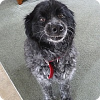 Adopt A Pet :: Pepper - PENDING, in Maine - kennebunkport, ME
