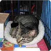 Adopt A Pet :: Andy - Westfield, MA