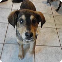 Adopt A Pet :: Aspen - Egremont, AB