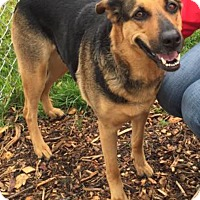 Adopt A Pet :: Sassy-WONDERFUL girl! - Hadley, MI