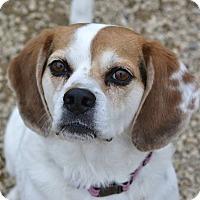 Adopt A Pet :: Luna - Meridian, ID