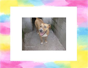 Boxer Mix Dog for adoption in KELLYVILLE, Oklahoma - CASSIE