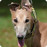 Adopt A Pet :: Sawyer - West Palm Beach, FL