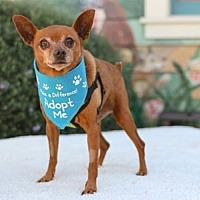 Adopt A Pet :: Marlon - Pacific Grove, CA
