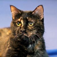 Adopt A Pet :: Gracie - Coronado, CA