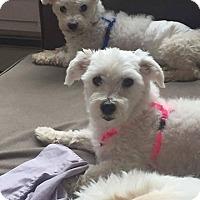 Adopt A Pet :: Chico and Nico - Tenafly, NJ