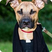 Adopt A Pet :: Anakin - West Orange, NJ