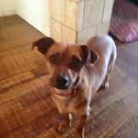 Adopt A Pet :: Paris - Amarillo, TX