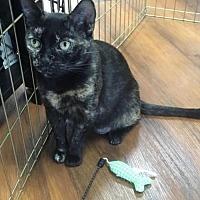 Adopt A Pet :: Evon - Devon, PA
