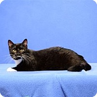 Adopt A Pet :: Lucy Van Pelt - Cary, NC