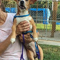 Adopt A Pet :: Roscoe - Stroudsburg, PA