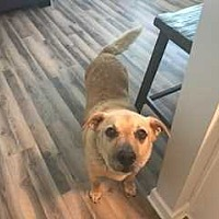 Adopt A Pet :: Max ~Courtesy Listing~ - Youngsville, NC