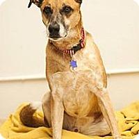 Adopt A Pet :: Cassidy - Fresno, CA