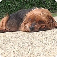Adopt A Pet :: Fiona - Austin, TX