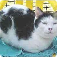 Adopt A Pet :: Meeko - Lunenburg, MA
