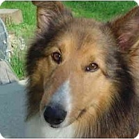 Adopt A Pet :: Andrew - Indiana, IN