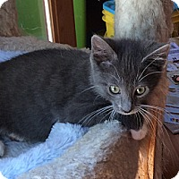 Adopt A Pet :: Terri - Port Republic, MD