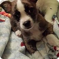 Adopt A Pet :: Anna - Staunton, VA